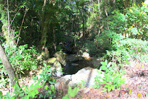 Daintree Rainforest - Cooper Creek Wilderness, Cape Tribulation, Australia