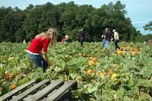 Ashland Berry Farm, Beaverdam, United States