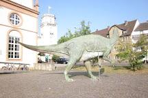 Naturkundemuseum im Ottoneum, Kassel, Germany