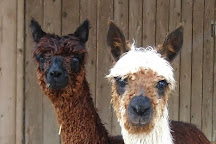 The Alpacas Of Spring Acres, Zanesville, United States