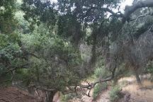 Thomas F. Riley Wilderness Park, Trabuco Canyon, United States