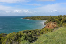 Point Danger Gannet Colony, Portland, Australia