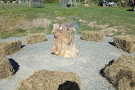 Buck Brook Alpacas