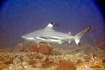 3Willys Diving Phuket, Patong, Thailand