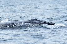 Whale Watching Sydney, Sydney, Australia