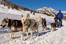 Jackson Hole Iditarod Sled Dog Tours, Jackson, United States