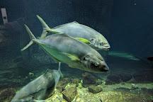 Shirahama Aquarium Kyoto University, Shirahama-cho, Japan