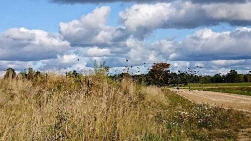 Ilmatsalu-Kärevere trail