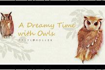 Lucky Owl, Osaka, Japan