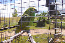 Black Hills Parrot Welfare & Education Center, Belle Fourche, United States