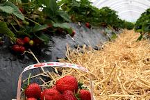 Broadslap Fruit Farm, Farm Shop and Cafe, Dunning, United Kingdom