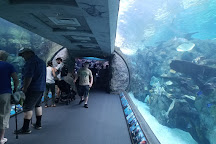 Aquarium of the Pacific, Long Beach, United States