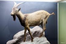Museu de Historia Natural do Funchal, Funchal, Portugal