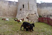 Chateau of Coucy, Coucy-le-Chateau-Auffrique, France
