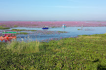 Talay Bua Dang (Red Lotus Lake), Kumphawapi, Thailand