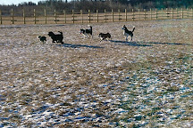 West River's Edge Dog Park, Fort Saskatchewan, Canada