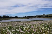 Bird Walk Coastal Access Trail, Bodega Bay, United States