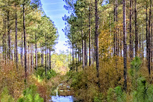 Francis Marion National Forest, Huger, United States