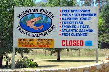 Mountain Fresh Trout & Salmon Farm, Harrietville, Australia
