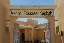 Macro Fossiles Kasbah, Erfoud, Morocco