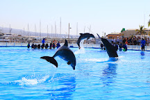 Cabo Dolphins by Cabo Adventures, Cabo San Lucas, Mexico