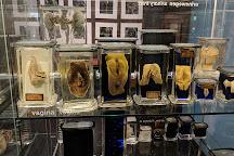 Museum Vrolik, Amsterdam, The Netherlands