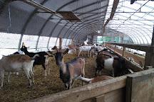 Misty Creek Goat Dairy, Leola, United States