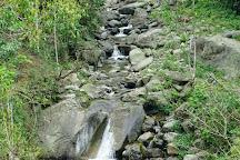 Neora Valley National Park, Darjeeling District, India