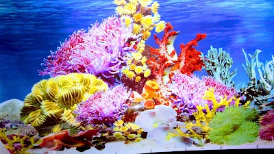 Sea Fish Aquarium Birds Fountain Uttar Pradesh 91 99976 07778