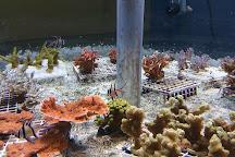 The Seas with Nemo & Friends, Orlando, United States
