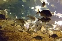 Aquarium Marin De Tregastel, Tregastel, France