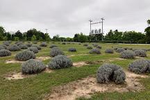 Chappell Hill Lavender Farm, Brenham, United States