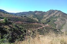 Bodega Ferrer Bobet, Falset, Spain