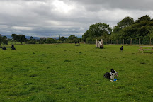 Run Free Dog Fields, Glasgow, United Kingdom