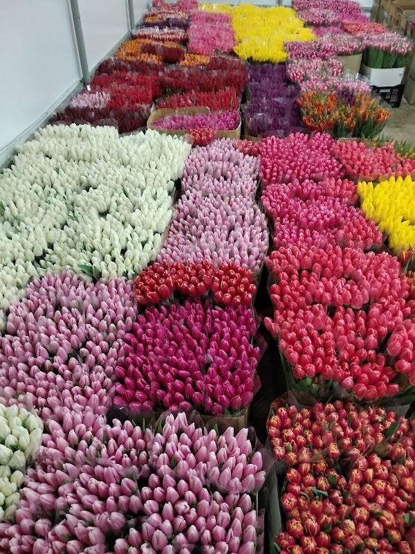 Кустовыми розами, поставщики живые цветы оптом украина