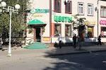 """Дом Цветов """"МИМОЗА"""" на фото Гатчины"""