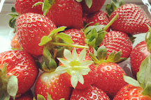 Raju Hill Strawberry Farm, Cameron Highlands, Malaysia