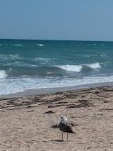 Пляж Лионель