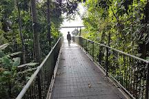 Mamu Tropical Skywalk, Innisfail, Australia