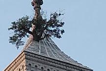 Courthouse Tree, Greensburg, United States