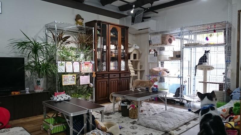 ねこcafe Salon de Kei ~猫カフェ(姫路)~