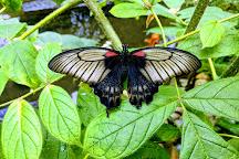 Victoria Butterfly Gardens, Central Saanich, Canada