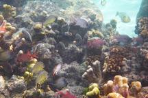 Tetepare, Munda, Solomon Islands