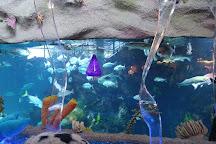 Downtown Aquarium, Denver, United States