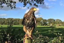 Falconry Kerry, Killarney, Ireland