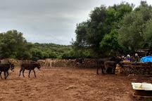 Menorca Donkey Rescue, Alaior, Spain