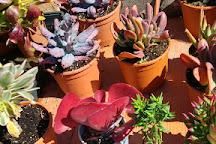 Cactus Nijar, Nijar, Spain
