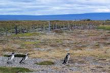 Seno Otway, Punta Arenas, Chile