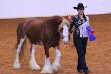 Aunique Ranch Gypsy Cob Vanner Horses, Huntsville, United States