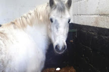 Birr Equestrian Centre, Birr, Ireland